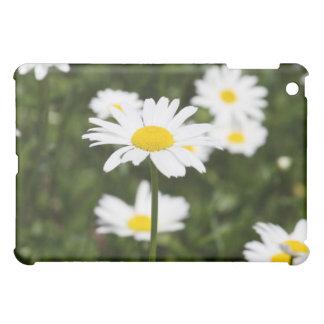 Blühende Gänseblümchen iPad Mini Hülle