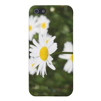 Blühende Gänseblümchen iPhone 5 Schutzhülle
