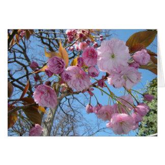 Blühende Kirschblüten Karte