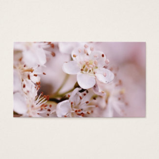 Blühende Kirschblüten Visitenkarte