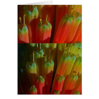 Blühende KNOSPEN: Kaktus wild:  Grüße, Goodluck Karte