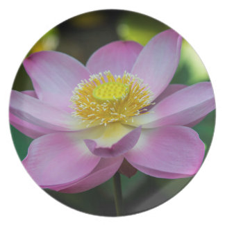 Blühende Lotos-Blume, Indonesien Teller