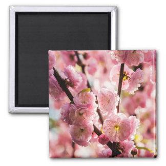 Blühende Pflaume - rosa Paradize Quadratischer Magnet