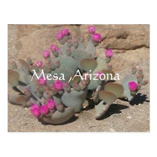 blühende rosa Kaktus-Blumen in MESA, Arizona Postkarte