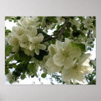 Blühender Apfelbaum-Druck Poster