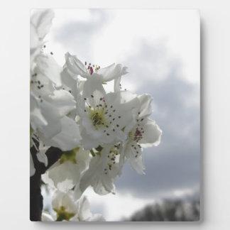 Blühender Birnenbaum gegen den bewölkten Himmel Fotoplatte