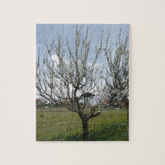 Blühender Birnenbaum im Garten Toskana, Italien Puzzle