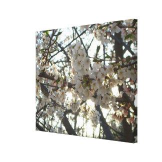 Blühender Frühlings-Baum der Leinwanddruck