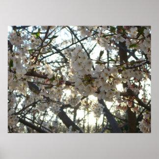 Blühender Frühlings-Baum der Poster