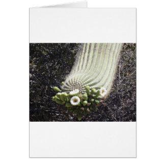 Blühender Saguaro Karte