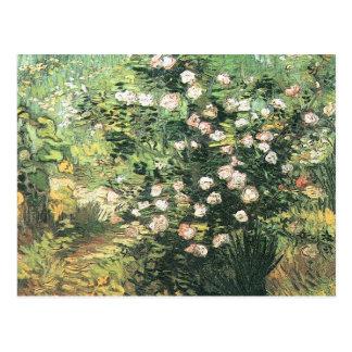 Blühendes Rosebush durch Vincent van Gogh Postkarte