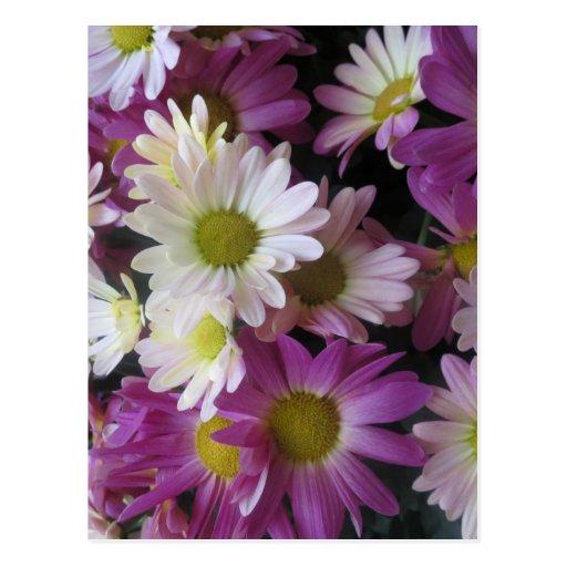 BLUME Blumenstrauß-Schmetterlings-Garten: Elegante Postkarte