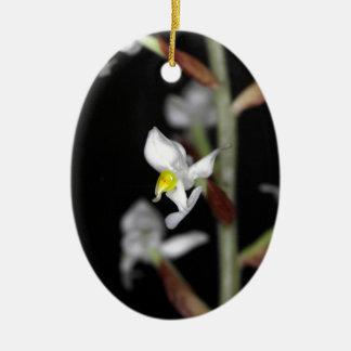 Blume der Orchidee Ludisia entfärben Ovales Keramik Ornament