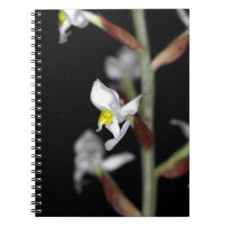 Blume der Orchidee Ludisia entfärben Spiral Notizblock