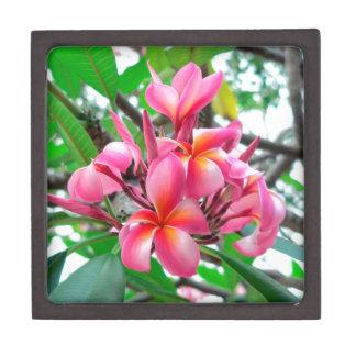 Blume des Frangipani (Plumeria) Schachtel