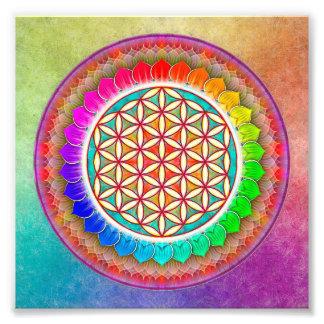 Blume des Lebens - Regenbogenlotos Fotodrucke