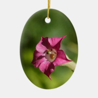 Blume des Tabaks (Nicotiana tabacum) Ovales Keramik Ornament