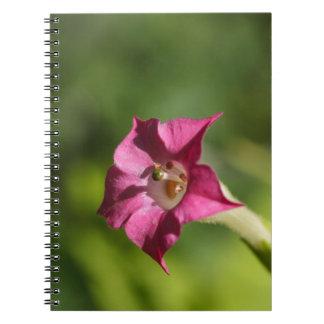 Blume des Tabaks (Nicotiana tabacum) Spiral Notizblock