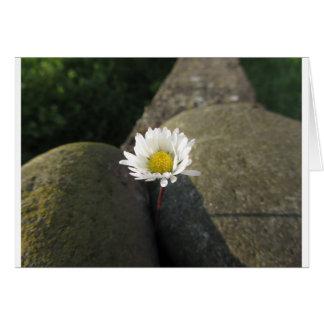 Blume des weißen Gänseblümchens des Singles Karte