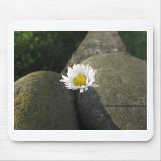 Blume des weißen Gänseblümchens des Singles Mauspad
