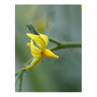 Blume einer Gurken-Pflanze Postkarte