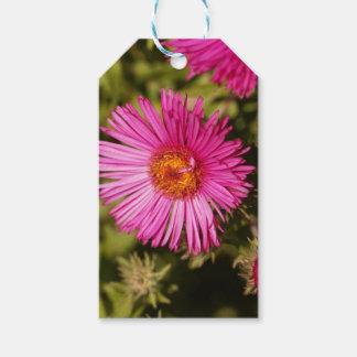 Blume einer Neu-England Aster Geschenkanhänger