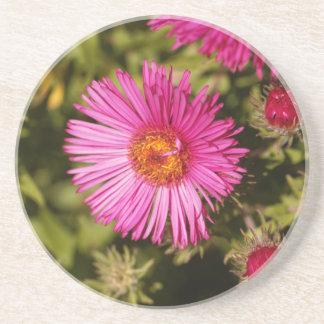 Blume einer Neu-England Aster Getränkeuntersetzer