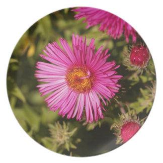 Blume einer Neu-England Aster Melaminteller