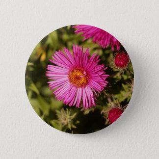 Blume einer Neu-England Aster Runder Button 5,1 Cm
