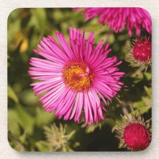 Blume einer Neu-England Aster Untersetzer