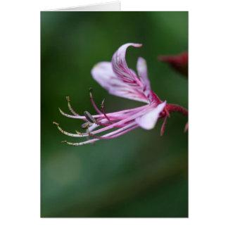 Blume eines brennenden Busches Karte