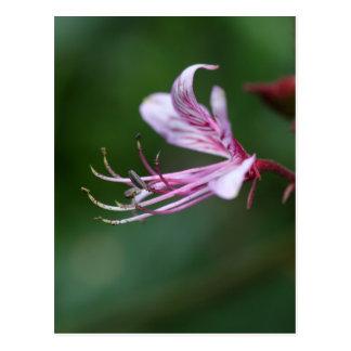 Blume eines brennenden Busches Postkarte