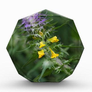 Blume eines Kuhweizens mit Haube Auszeichnung