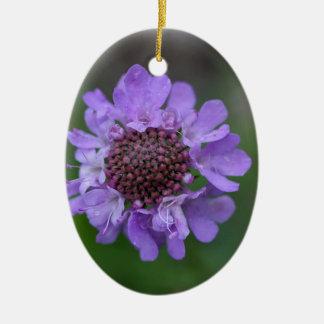 Blume eines Scabiosa lucida Ovales Keramik Ornament
