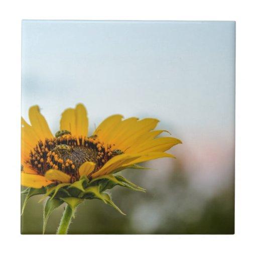Blume Keramikfliesen