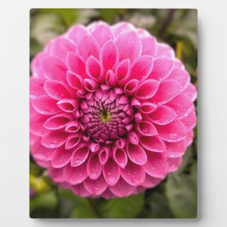 Blume Fotoplatte