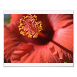 Blume in der Blüte Fotodruck
