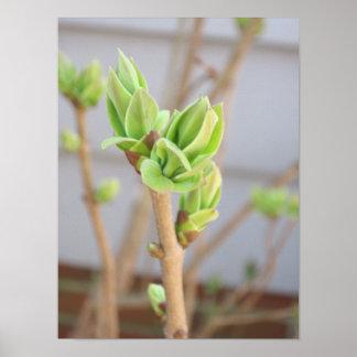 Blume knospt Plakat-Drucke