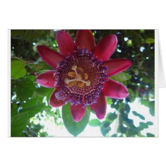 Blume, lila Passionflower Karte