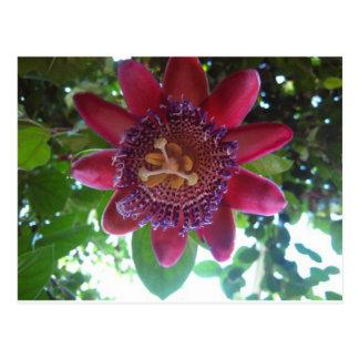 Blume, lila Passionflower Postkarte