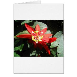 Blume, rote Leidenschafts-Blume Karte