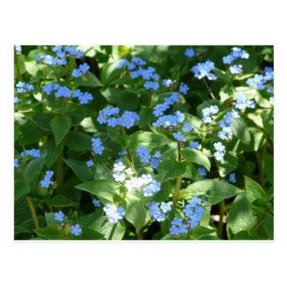 Blume Vergissmeinnicht Postkarte