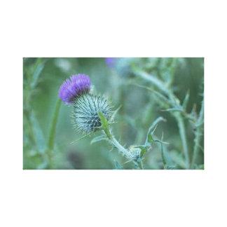 Blume von Schottland Leinwanddruck