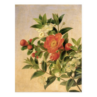 Blumen, 1835 postkarte