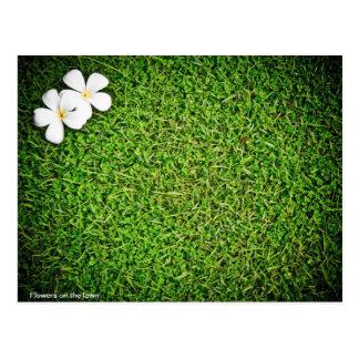 Blumen auf dem Rasen Postkarte