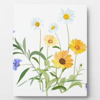 Blumen-Blumen des Feldes Fotoplatte
