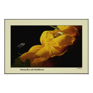Blumen-Blumengarten blüht Fotografie Poster