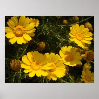Blumen-Blumengarten-Fotografie Poster
