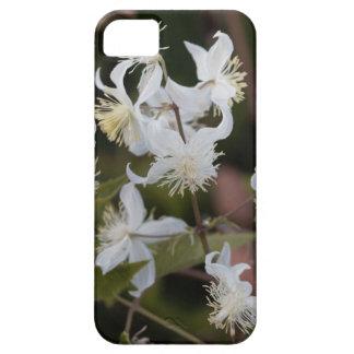 Blumen der Reisend-Freude (Clematis brachiata) Barely There iPhone 5 Hülle