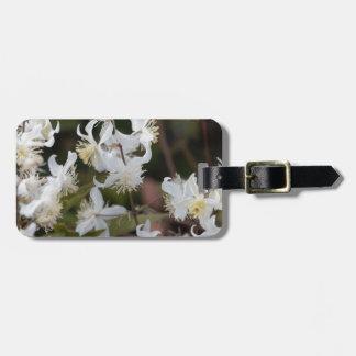 Blumen der Reisend-Freude (Clematis brachiata) Gepäckanhänger